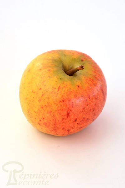 POMMIER Cox's Orange Pippin