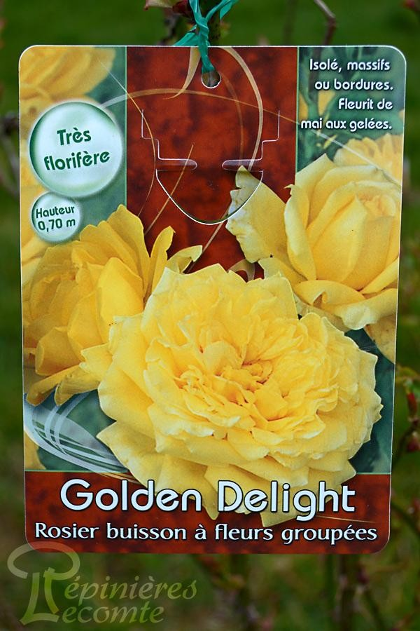 ROSIER Golden Delight