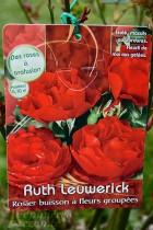 ROSIER Ruth Leuwerick