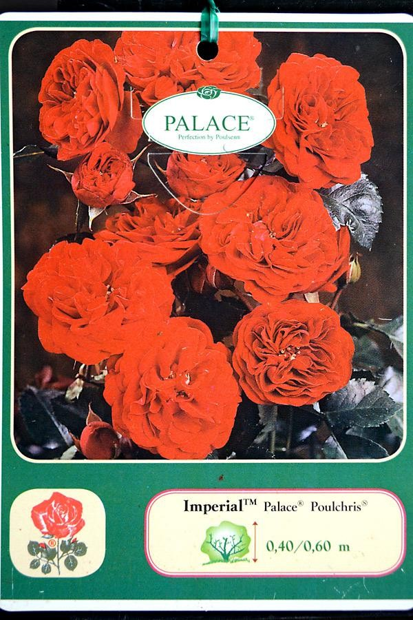 ROSIER Imperial Palace ®