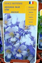 ANCOLIE Blue Star