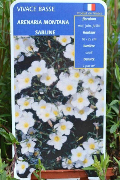 SABLINE