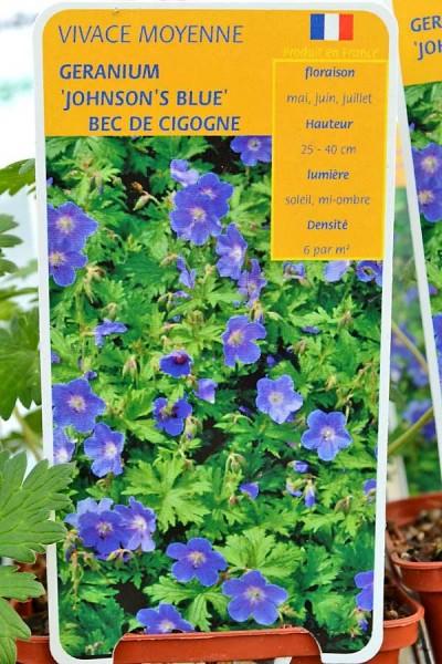 BEC de CIGOGNE Johnson's Blue