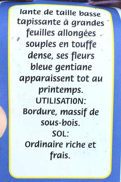 PULMONAIRE Azurea