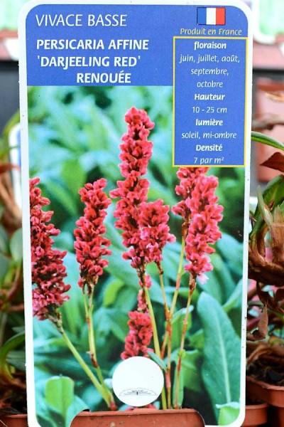 RENOUÉE Darjeeling Red
