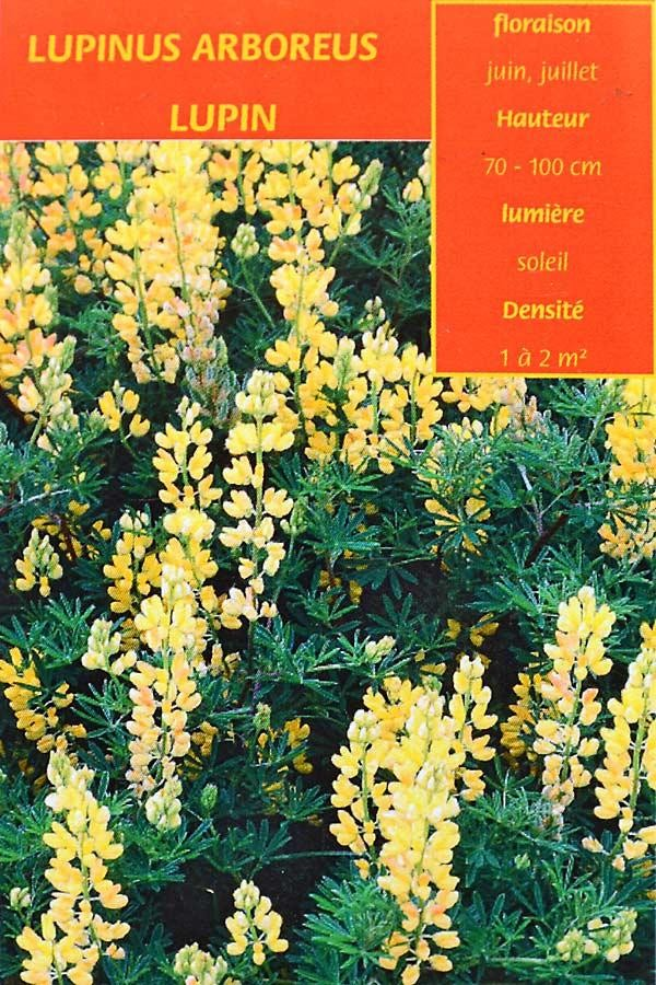 LUPIN Arborescent