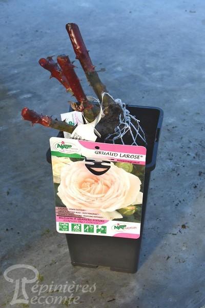 ROSIER Gruaud La Rose®